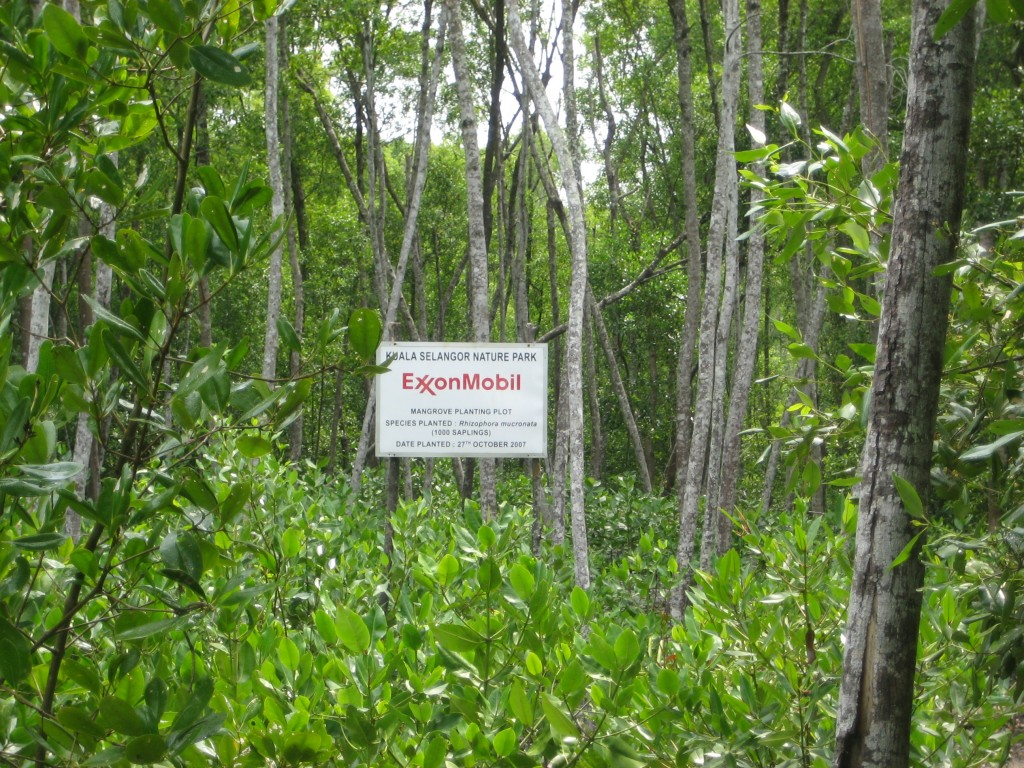 Are you serious? Am I supposed to believe Exxon Mobil cares about saving mangrove forests? *sigh*